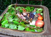 Priatelia Zeme – Miss kompost 2013
