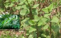 Upozornenie – povinnosť odstraňovať invazívne druhy rastlín