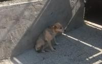 Hľadá sa majiteľ túlavého psíka