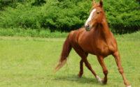 Registrácia koní