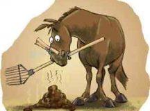 Upozornenie pre majiteľov koní v našej obci