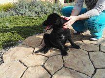 Našlo sa čierne šteniatko